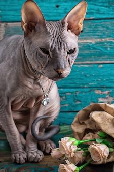Sphynx di razza gatto serio