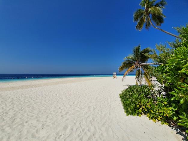 Spiaggia del mare in maldive, con alberi di cocco e lo sfondo del cielo.