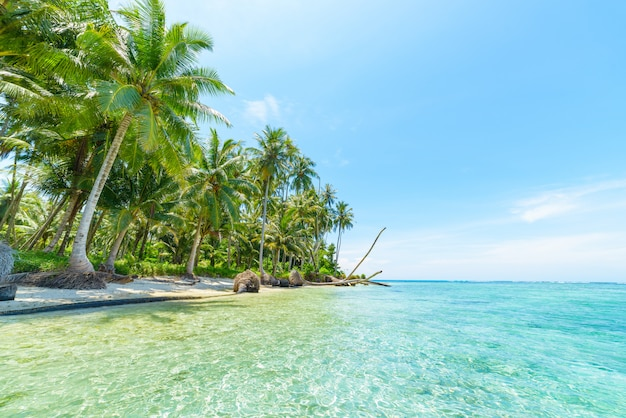 Spiaggia di sabbia bianca con acqua blu turchese del cocco degli alberi tropicali
