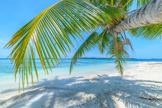 Spiaggia di sabbia bianca con l'isola tropicale dell'acqua blu del turchese degli alberi del cocco