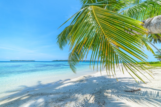 Spiaggia di sabbia bianca con palme da cocco turchese acqua blu barriera corallina, destinazione di viaggio tropicale, spiaggia deserta nessuna gente - isole banyak, sumatra, indonesia