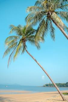 Spiaggia paradiso tropicale con mare caraibico e palme da cocco