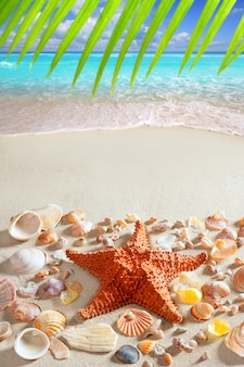 Spiaggia sabbia stella marina caraibi mare tropicale