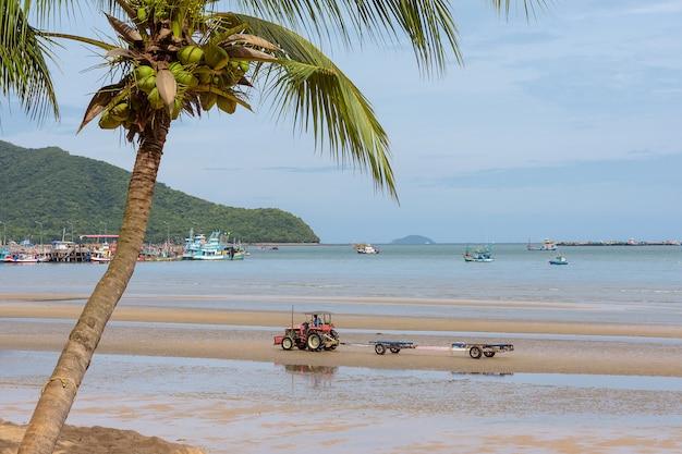 Spiaggia tropicale con palme