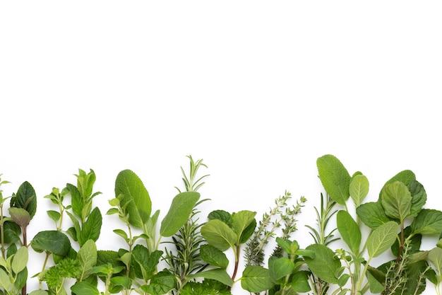 Spice foglie di erbe e peperoncino su sfondo bianco