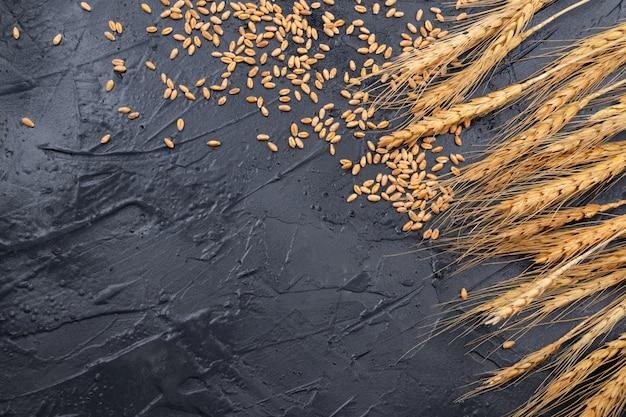 Spighe di grano asciutte su uno sfondo grigio scuro. posto per il testo
