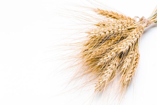 Spighe di grano isolate su bianco