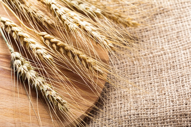 Spighe di grano su una tela di sacco