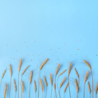 Spighe dorate di grano e segale, spighette di cereali secchi in fila su luce