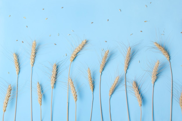 Spighe dorate di grano e segale, spighette di cereali secchi su luce
