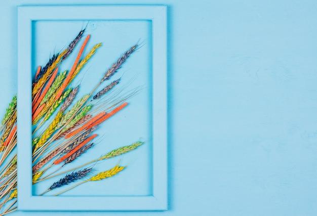 Spighette autunnali colorate di grano in una cornice blu su un blu. decorazione di fiori secchi.