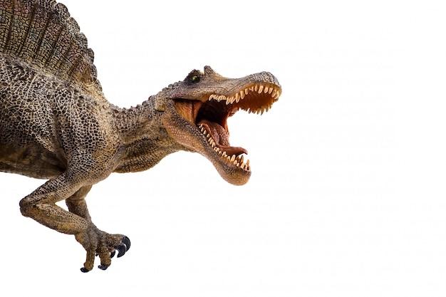 Spinosaurus, dinosauro su sfondo bianco