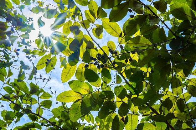 Splende il sole attraverso gli alberi, sullo sfondo della natura