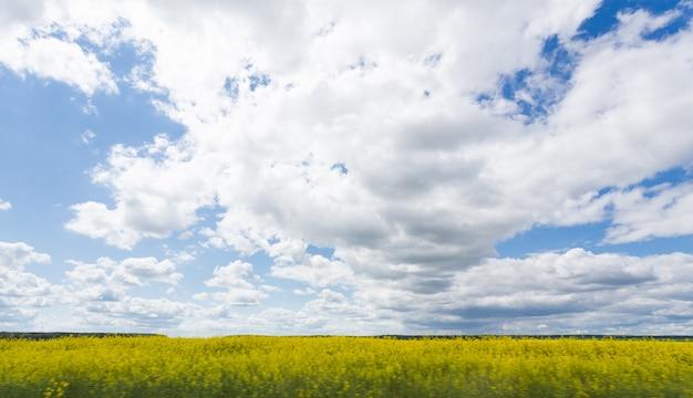 Splendida giornata di sole nel parco con alberi verdi, erba e cielo nuvoloso blu