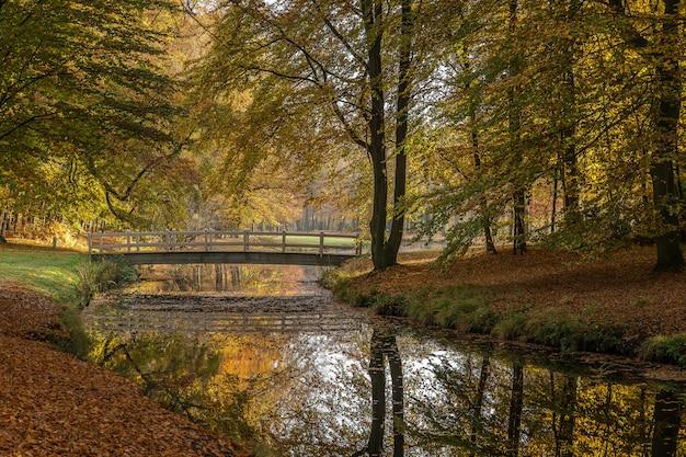 Splendida ripresa di un lago nel parco e un ponte per attraversare il lago circondato da alberi