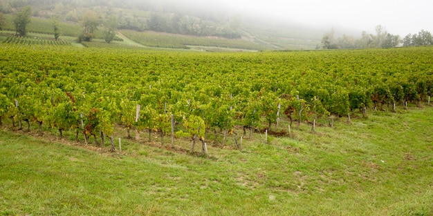 Splendidi vigneti sulle colline di saint emilion, vino francese di bordeaux