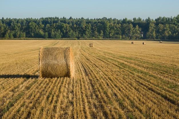 Splendido paesaggio agricolo estivo con mucchi di fieno. concetto di agricoltura.