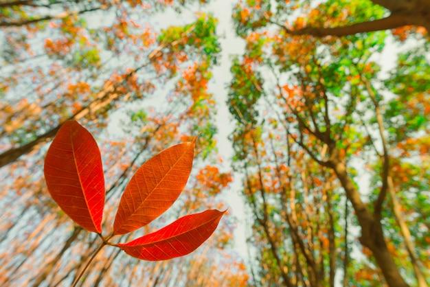 Splendido paesaggio autunnale di una foresta scenica, alberi autunnali colorati nella foresta
