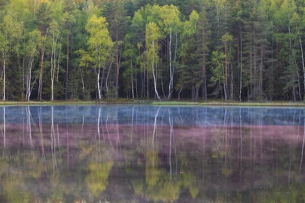 Splendido paesaggio estivo al mattino presto. nebbia su un lago in una foresta estiva circondata da alberi.