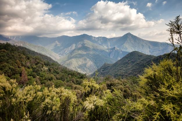 Splendido paesaggio montano, foresta, cielo blu, sfumatura