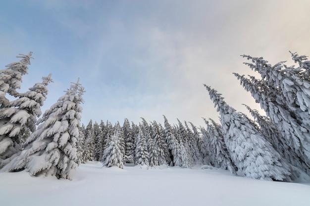 Splendido paesaggio montano invernale. abeti alti coperti di neve nella foresta di inverno e cielo nuvoloso.