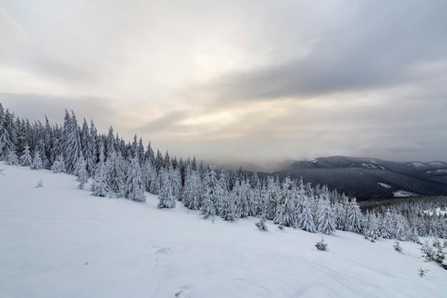 Splendido paesaggio montano invernale. alti abeti verde scuro coperti di neve sulle cime delle montagne.