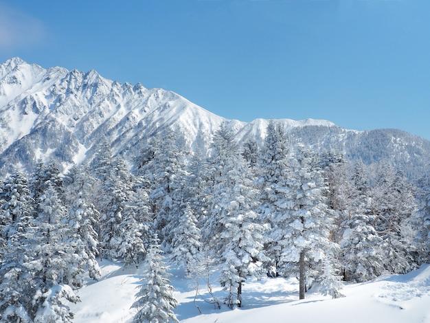 Splendido panorama invernale con abeti coperti di neve