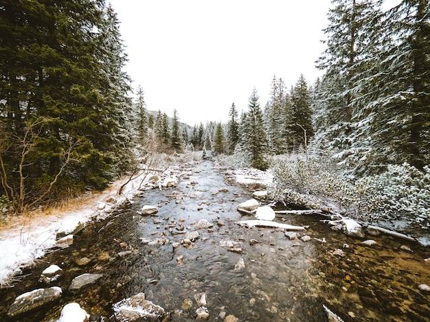 Splendido scenario di un fiume circondato da abeti vicino ai monti tatra in polonia