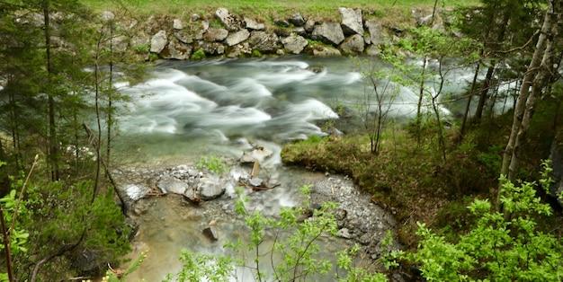 Splendido scenario di un fiume in una foresta circondata da alberi verdi