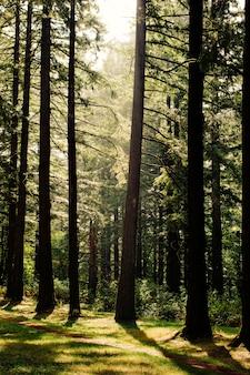 Splendido scenario di una foresta