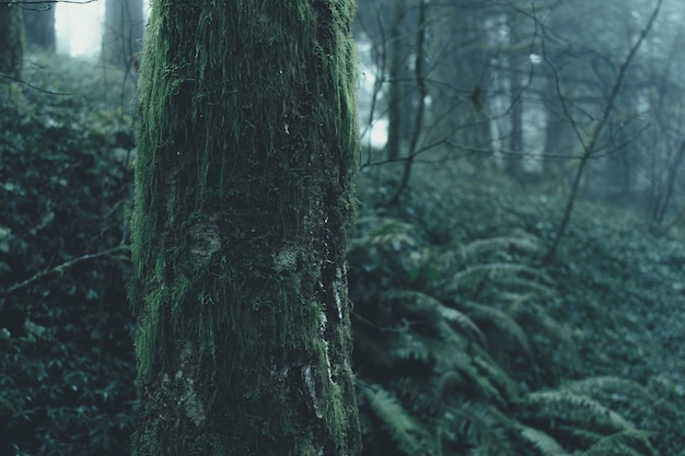 Splendido scenario di una misteriosa foresta nebbiosa in una giornata cupa