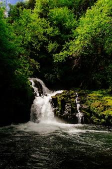 Splendido scenario di una straordinaria foresta selvaggia con vegetazione mozzafiato