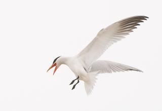 Splendido uccello volante