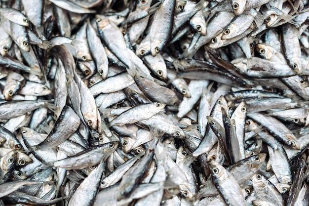 Spratti di pesce al mercato ittico. pesce biologico fresco