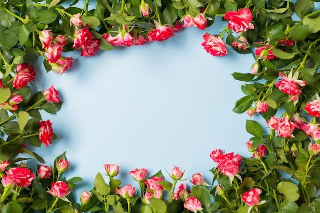 Spruzzi la struttura delle rose con spazio libero per testo sul desktop blu-chiaro del fondo. copia spazio.