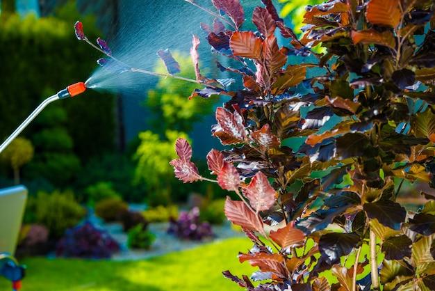 Spruzzo di controllo del parassita del giardino