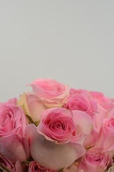 Spruzzo di estate di pomponella della rosa di rosa su fondo bianco