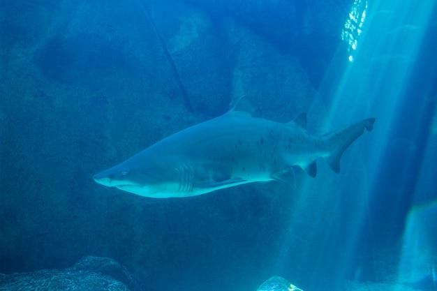 Squalo che nuota in un acquario