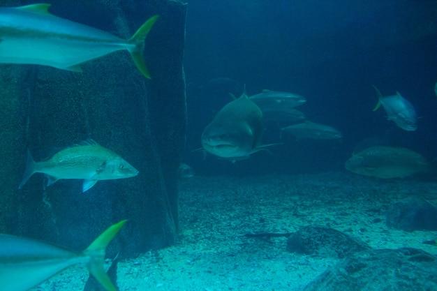 Squalo nuota con il pesce