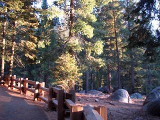 Staccionata di legno nella foresta