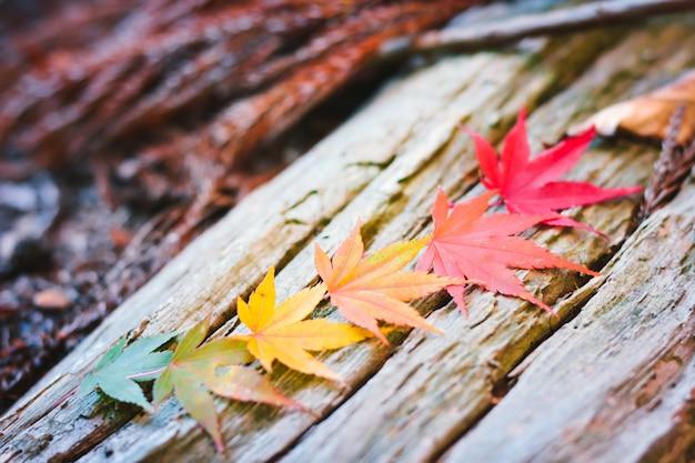 Stagione autunnale colorata di albero e foglie