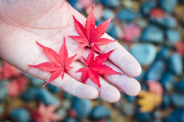 Stagione autunnale di albero e foglie in giappone