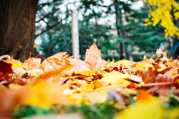 Stagione autunnale di albero e foglie