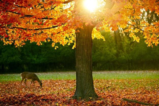 Stagione di autunno nel parco