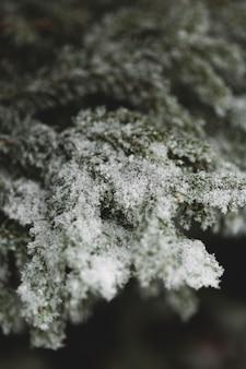 Stagione invernale con foglie innevate