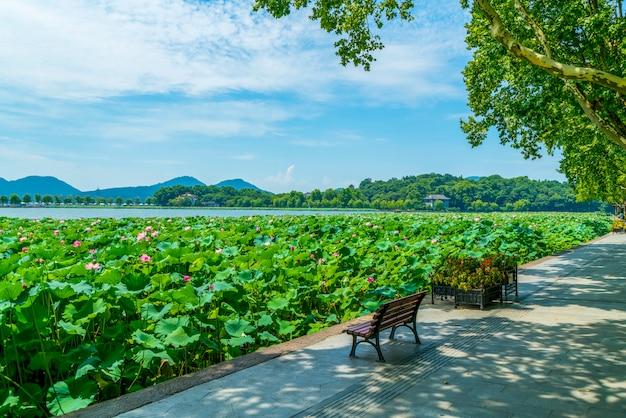 Stagno di loto nel lago ovest