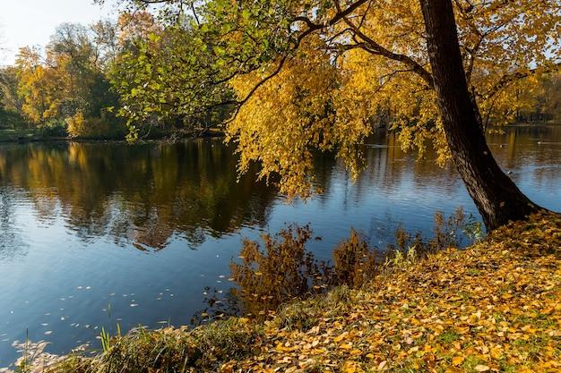 Stagno in autunno, foglie gialle, riflessione paesaggio di riflessione lago foresta d'autunno.