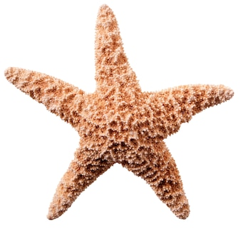 Starfish isolato su sfondo bianco