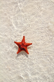 Starfish orange in acque poco profonde ondulate