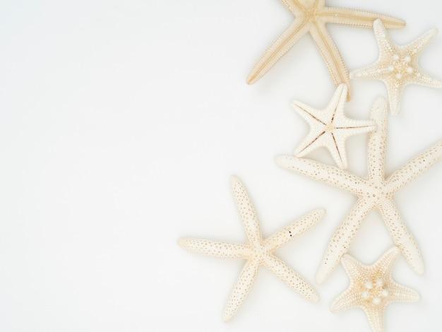 Starfish su uno sfondo bianco.